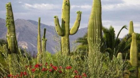 《荒野大镖客2》墨西哥仙人掌乐园探险 第一集