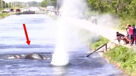 大象落入河水中,印度人激情上演鱼雷救象!