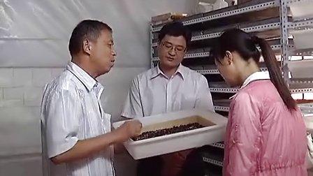 南阳花园养蝎场蝎子养殖家庭蝎子养殖蝎子养殖视频