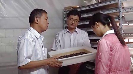 南阳花园养蝎场蝎子养殖立体蝎子养殖人工养蝎技术蝎子养殖技术视频13937796314