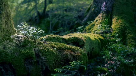 沉思冥想享受自然的宁静