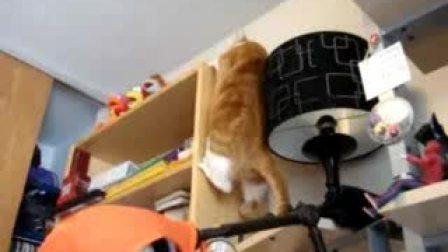 肥猫爬书架