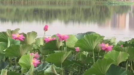风景秀丽的葛西河生态走廊。松原田晶老师舞蹈视频