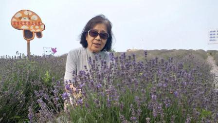 《临朐 宋香园》背景歌曲:《花香》《薰衣草》