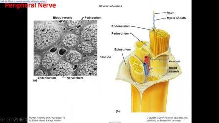 周围神经疾病超声评估The Value of Ultrasound Imaging in Peripheral Nerve Pathology