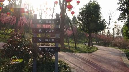 生活映像:梅花三弄-游绵阳西山公园