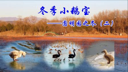 2021-2月-冬季小鹅宝-圆明园之冬二