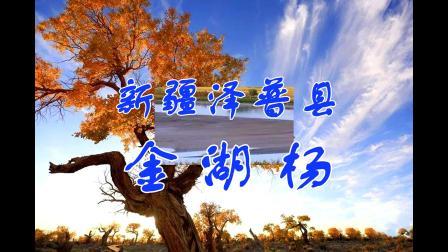 新疆泽普县——金湖杨