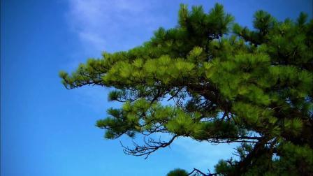 黄山迎客松庐山瀑布(5m2s)大屏背景墙视频-全十古云210708