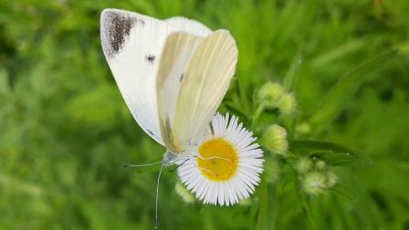 蝴蝶与花2