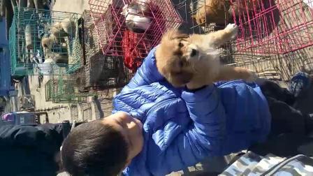 鑫鑫想买狗狗
