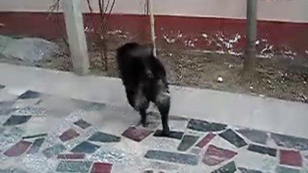 聪明的狗狗挖坑藏骨头