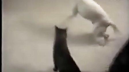 疯狂猫狗大战搞笑视频