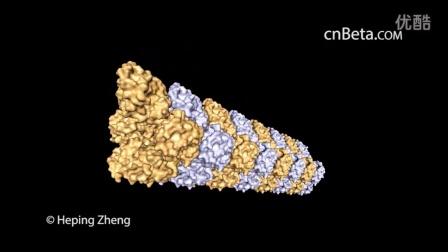 """研究人员揭开神秘受精过程:精子用""""鱼叉""""捕获卵子"""