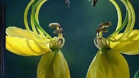 音乐视频巴乌演奏《夫妻双双把家还》0特_土豆视频3