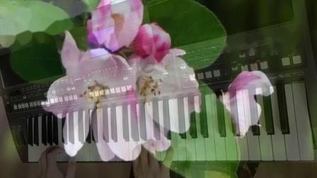 花儿与少年(电子琴)