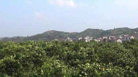 麻阳县大溪桥村 前方陶伊此陶二 美丽的田园村庄 谁都说是家乡好