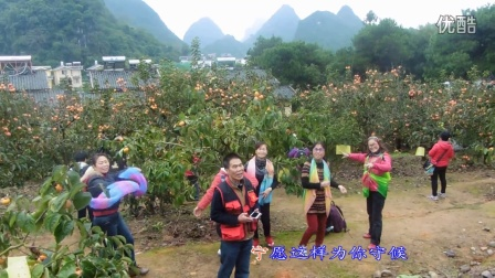 【拍客】桂林恭城月柿节