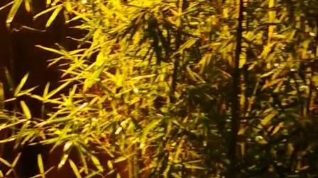 洞箫《幻月》,林语堂饭局即兴渣吹🙏