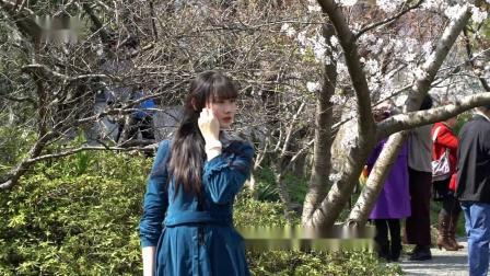 江苏-福岗友好樱花园(明孝陵风光,漫天飞舞的白色樱花如漫天雪,令人陶醉。)