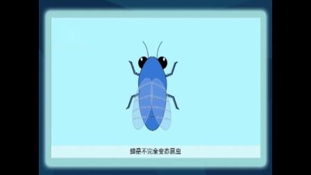 蝉的一生--葫芦岛科协