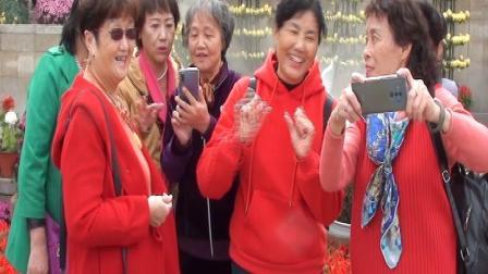暢遊沙湖公園菊展