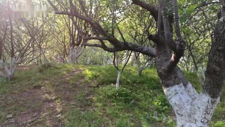 南京市莫愁湖公园崎岖小路助力健康