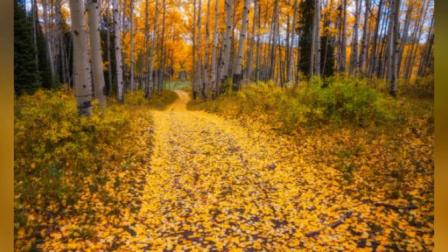 手风琴《秋去秋来变奏曲》