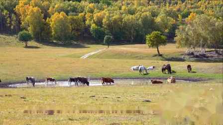陪你一起看草原—乌兰布统草原的秋天