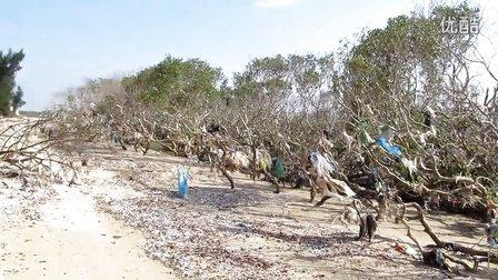 垃圾围树——特呈岛红树林正面临垃圾威胁!