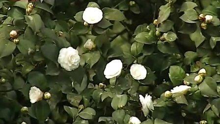 春日艳阳高照 市民赏花踏青忙 130223 重庆新闻联播
