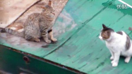 春天里发情的两只猫公