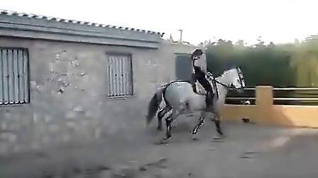 美女骑马-走舞步的温血马