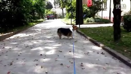 皮来皮往的视频 2013-04-25 12:50