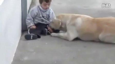 可爱的狗狗和患有唐氏综合症的孩子互动,多温馨