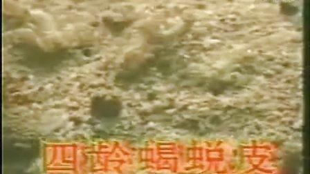 南阳蝎子养殖养蝎子技术养殖视频教程