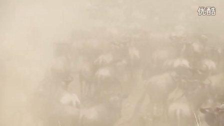 非洲动物大迁徙之角马过河3