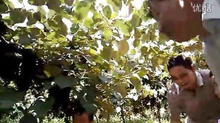 罗城两性花毛葡萄喜丰收----A
