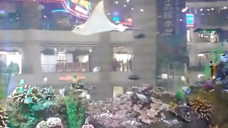 视频-广州天河正佳广场海底世界1