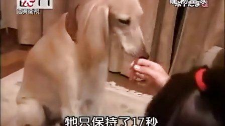 宠物当家20090206