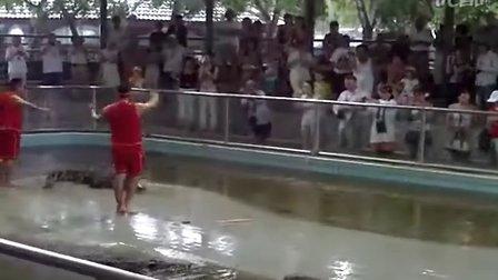 人与鳄鱼的亲密接触(惊)