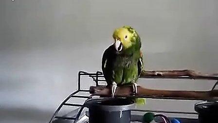 鹦鹉模仿婴儿的哭声