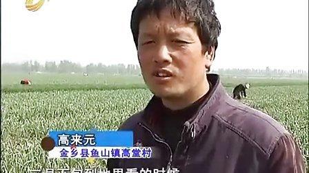 燕国胜——肥料试验有成绩 重茬病害不见了