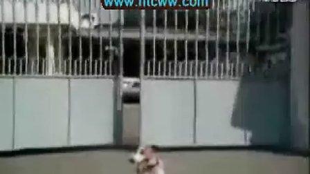 超级搞笑|狗狗|狗狗表演|搞笑动物|训狗|宠物6