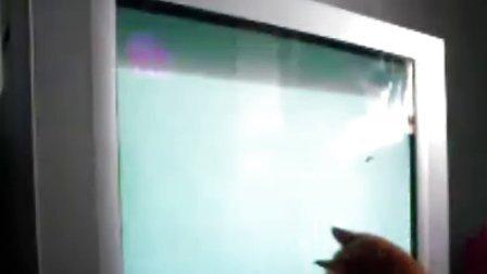 爱看电视的小猫