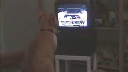 猫看着电视打拳击
