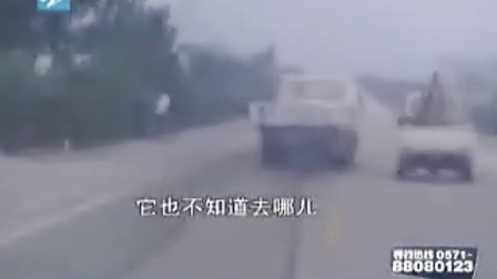 逃逸司机夺命狂奔 记者一路追踪(一)