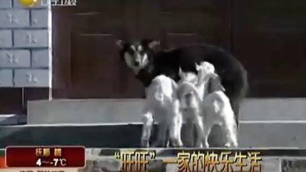 超级搞笑|狗狗|狗狗表演|搞笑动物|训狗|宠物13