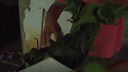 李韶华指导种植宝坛有机茶、养蚕及食用菌栽培