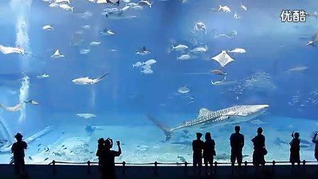 冲绳美之海水族馆 高清